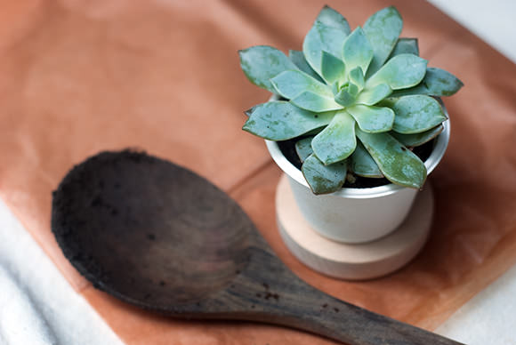 Super succulents your kids can grow handmade charlotte for Succulents that do well in shade