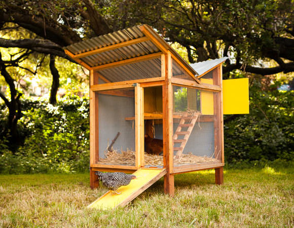 DIY Backyard Chicken Coop Plans