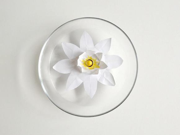 Diy Magic Blooming Paper Lily Handmade Charlotte