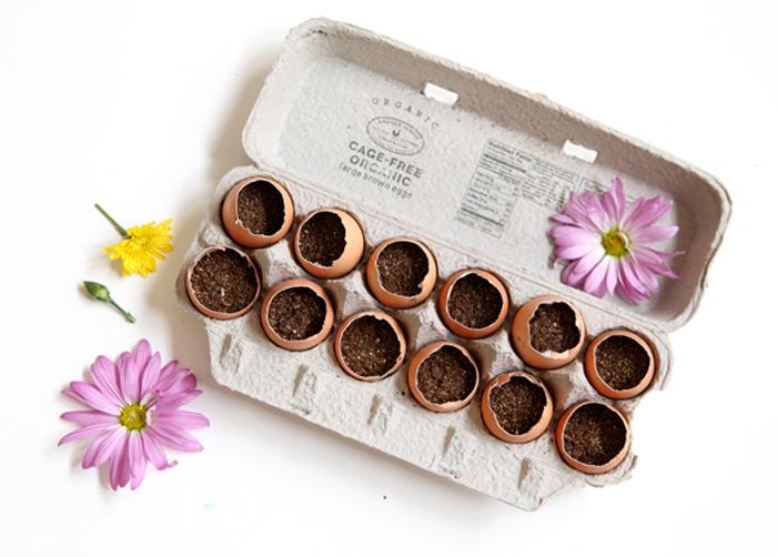 DIY Egg Carton Garden