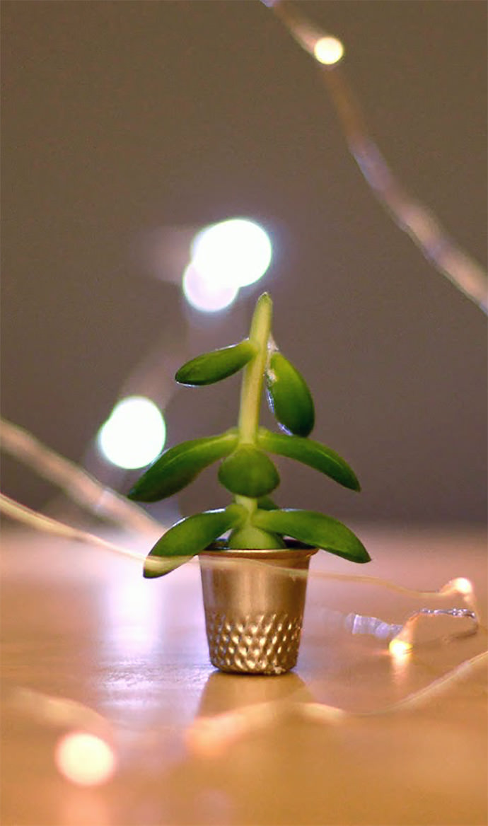 The World's Smallest Christmas Tree—fits inside a thimble! (via estefi machado)