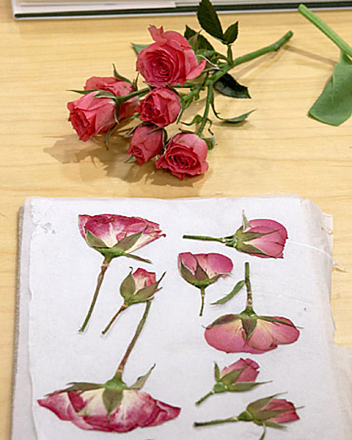 Mari_Flowers_Pressed