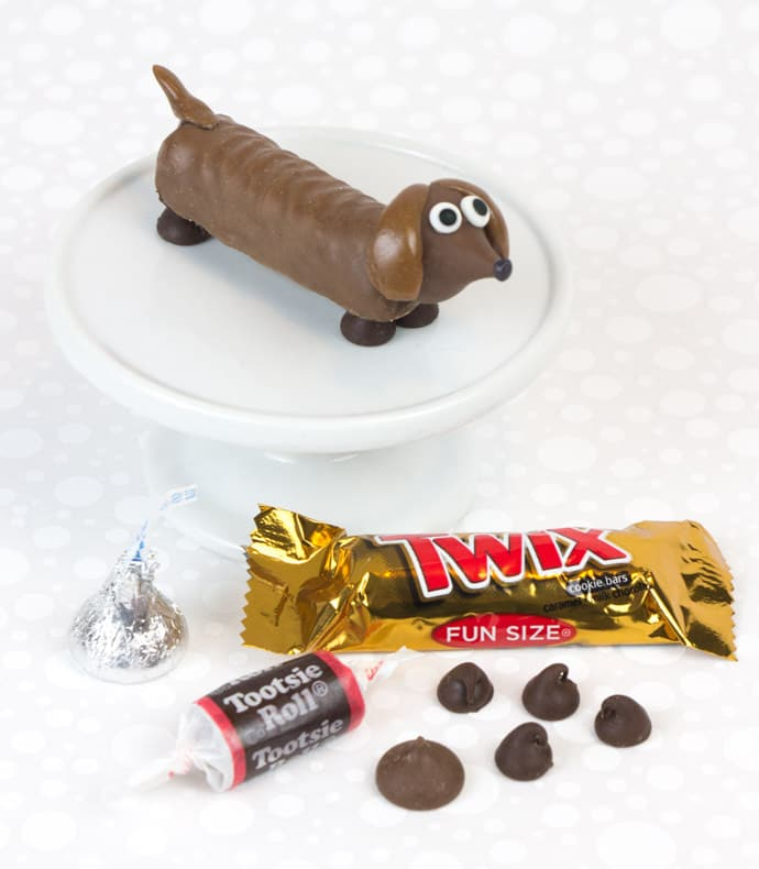 candy pet