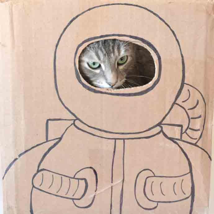 DIY Cat Portraits