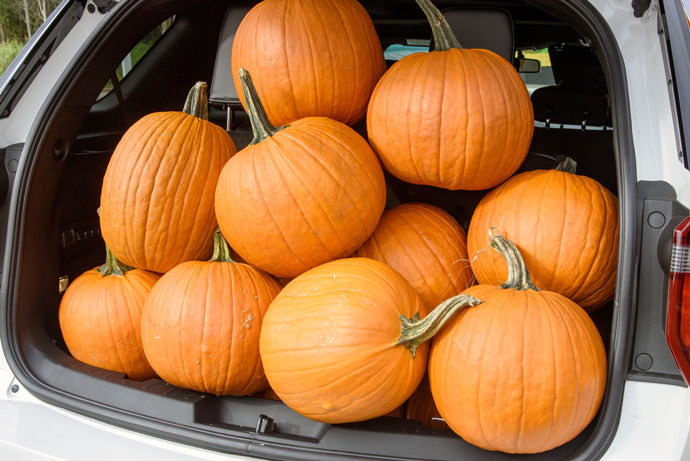 A five-year-old's guide to the perfect pumpkin patch trip
